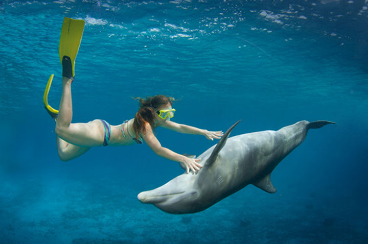 CTbC - Activity - Dive with Dolphins