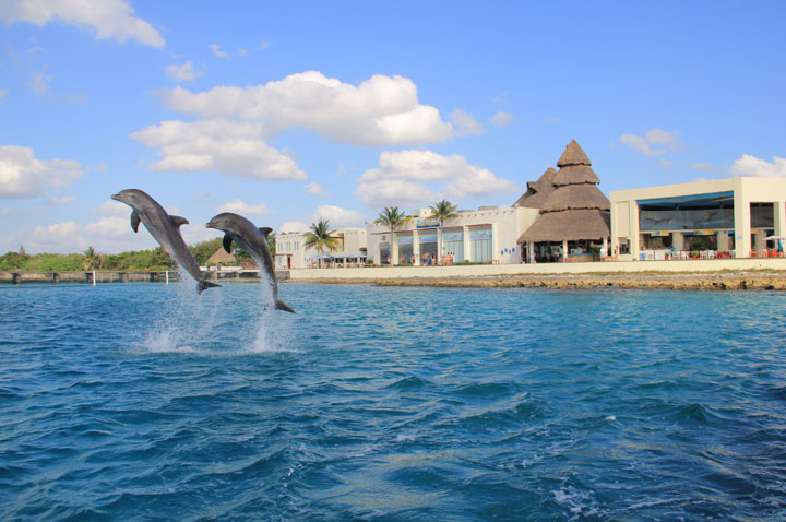 CTbC - Activity - Swim with Dolphins - Chankanaab Park
