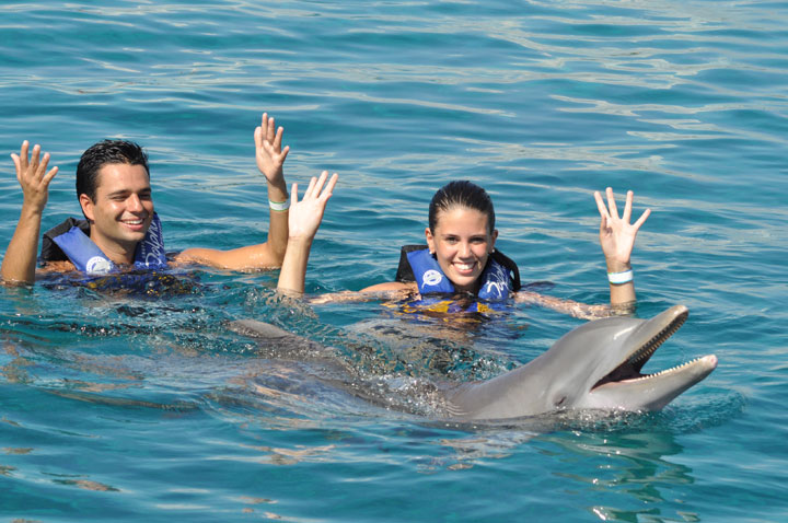 CTbC - Activity - Swim with Dolphins - Favorite Song