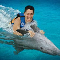 CTbC - Dolphins Swim Adventure - Activity