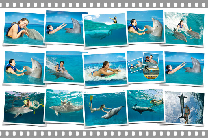CTbC - Dolphins Swim Adventure + Memories - Activity