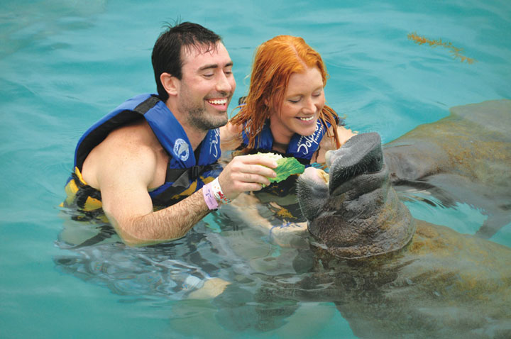 CTbC - Manatees Encounter - Activity