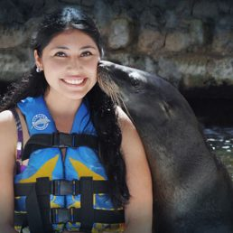 CTbC - Sea Lions Discovery - Activity